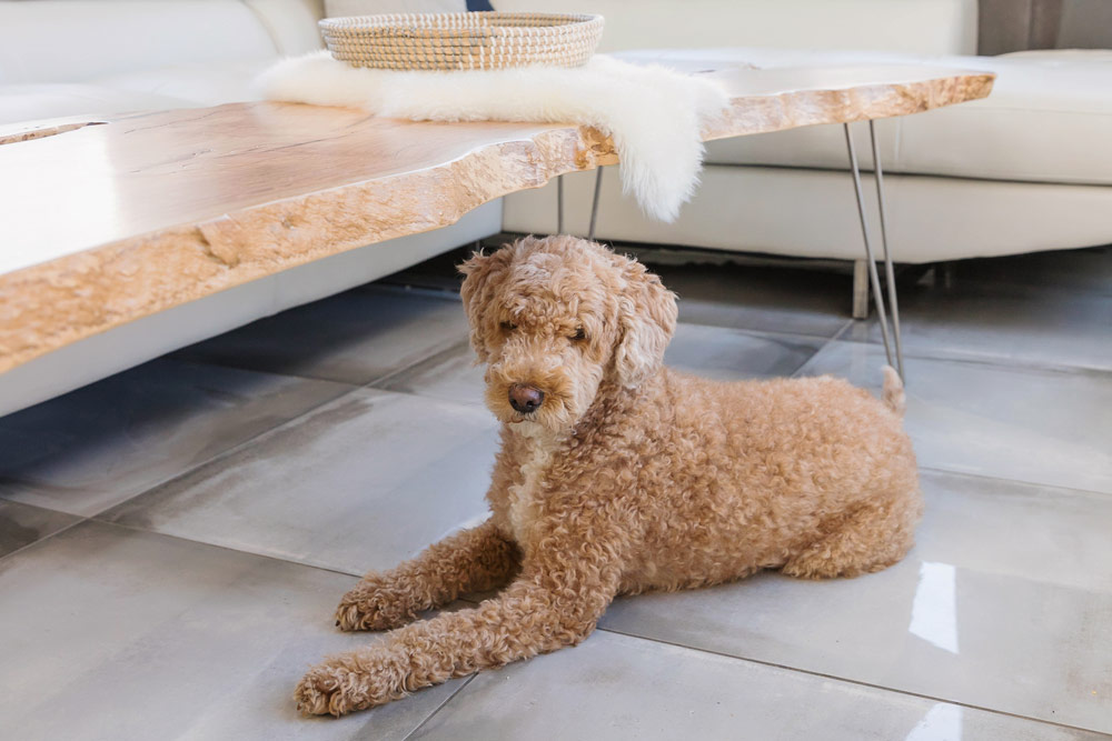 lindenroots-coffee-table-dog