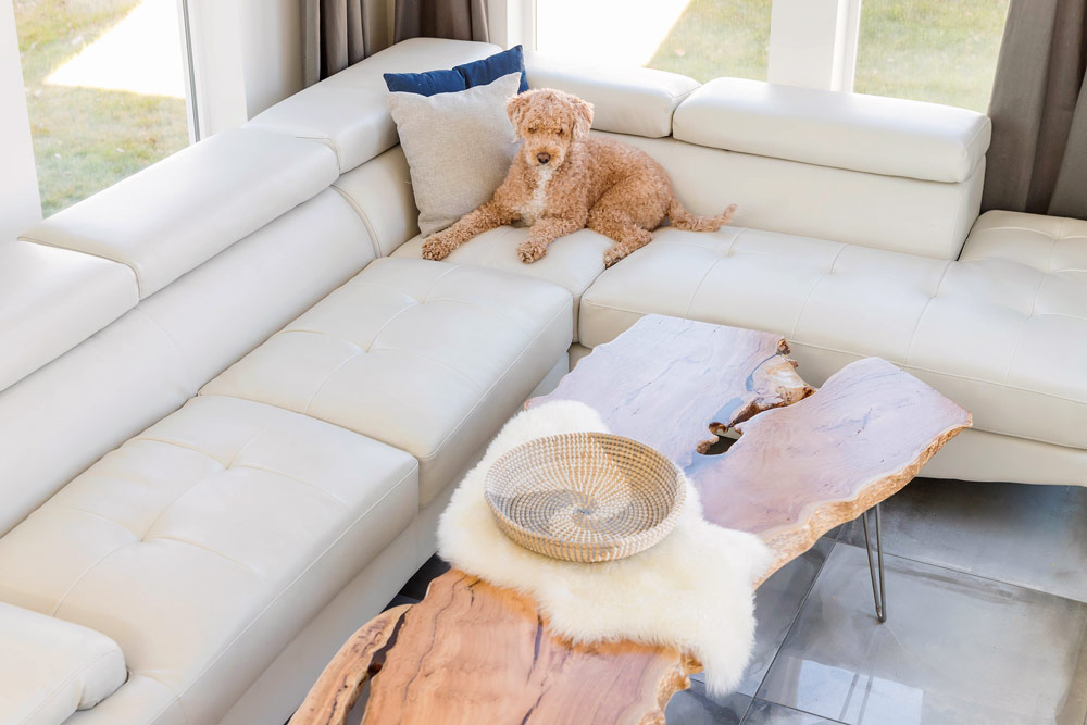 lindenroots-coffee-table-dog2
